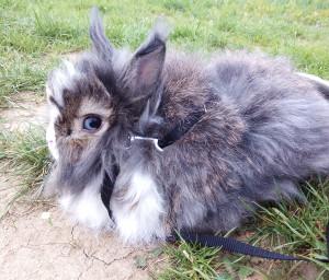 Mydvaakren - SEO neznalý králík